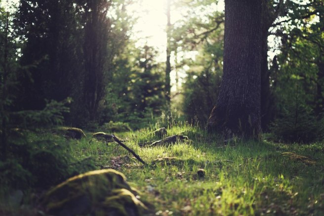 wood-nature-sunny-forest-large