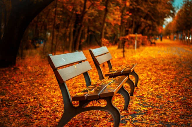 park-bench-2